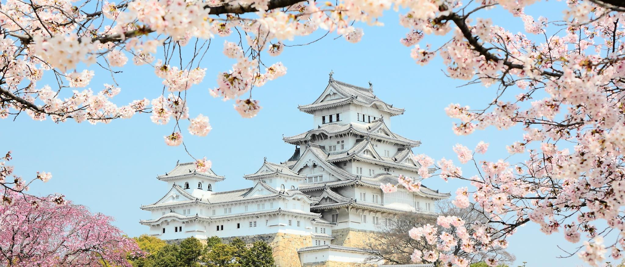 Замок Осака Япония сакура  № 3700674 без смс