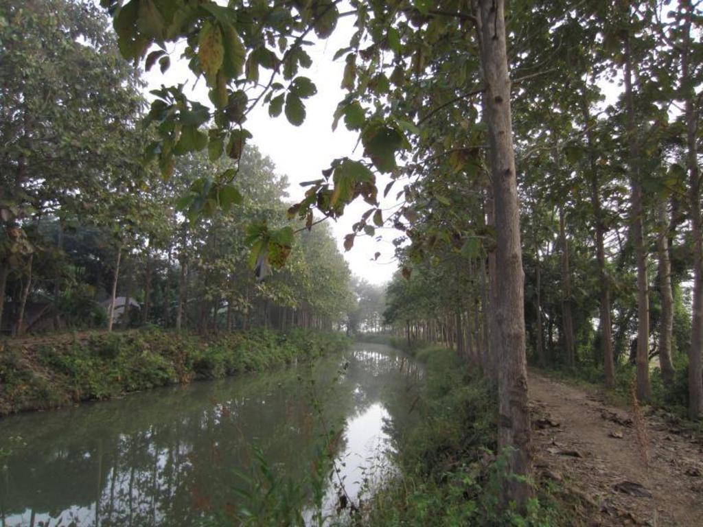 ライチ ガーデン バンガロー18