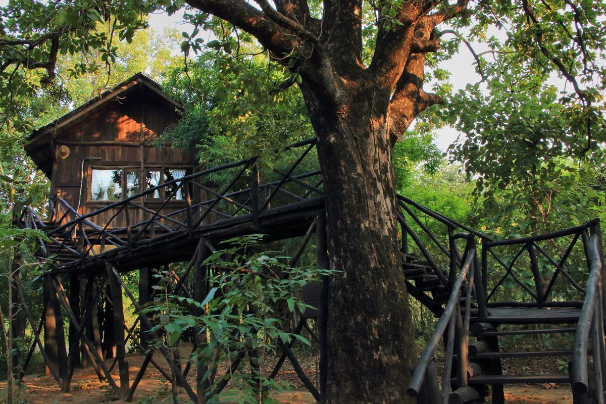 Pugdundee safaris - Tree House Hideaway, Umaria