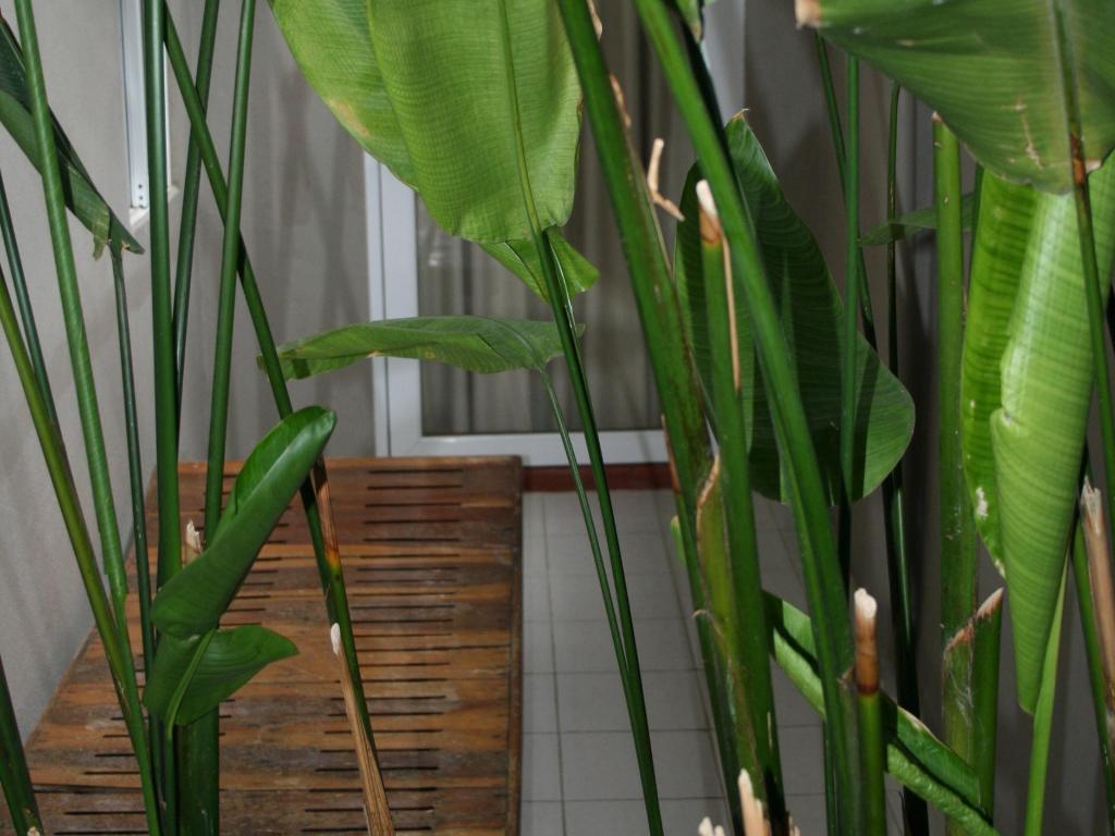 サバイ バンコク ホテル12