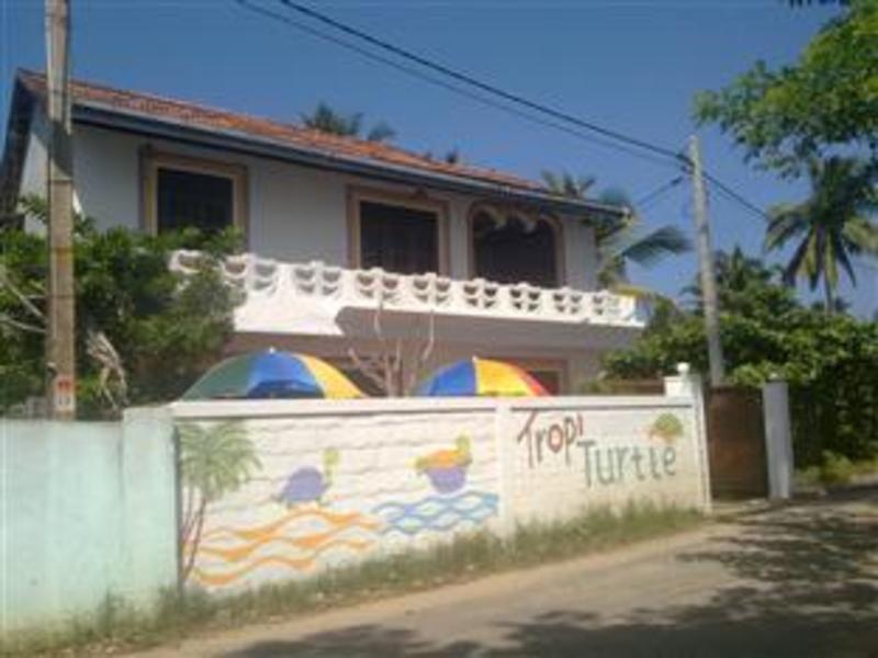 熱帶海龜民宿