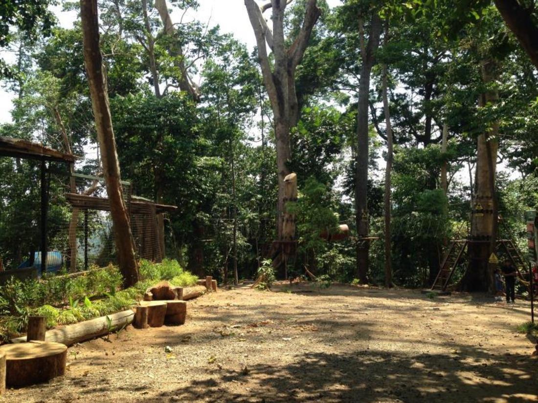 Best Price On Jungle Environment Survival Training Jest