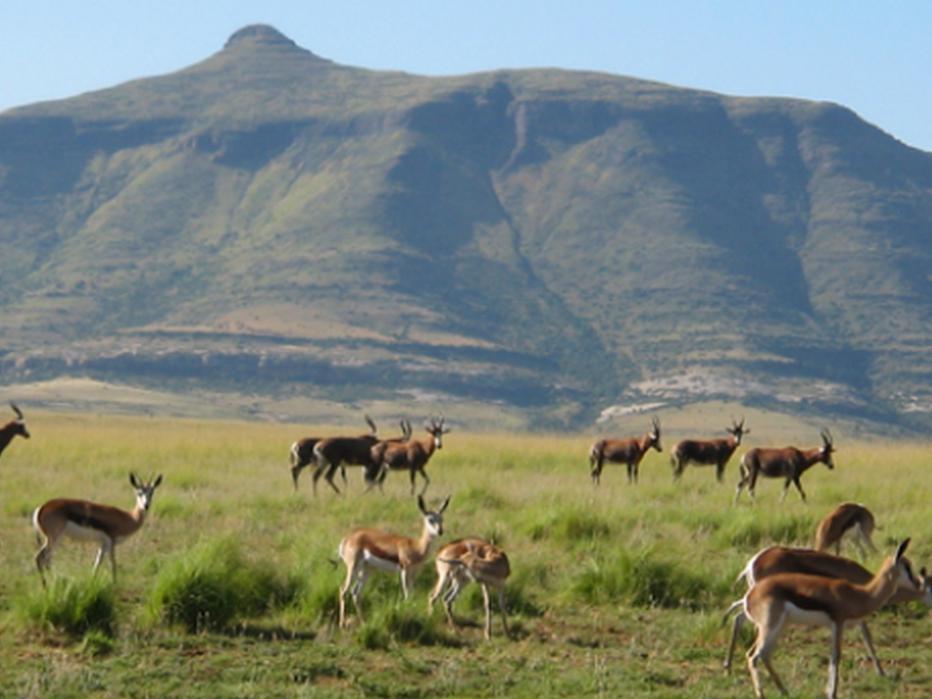 Moolmanshoek Private Game Reserve Hotel, Thabo Mofutsanyane