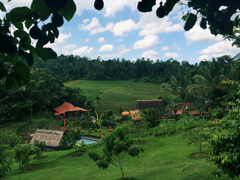 Bali Lush Guest House, Tabanan