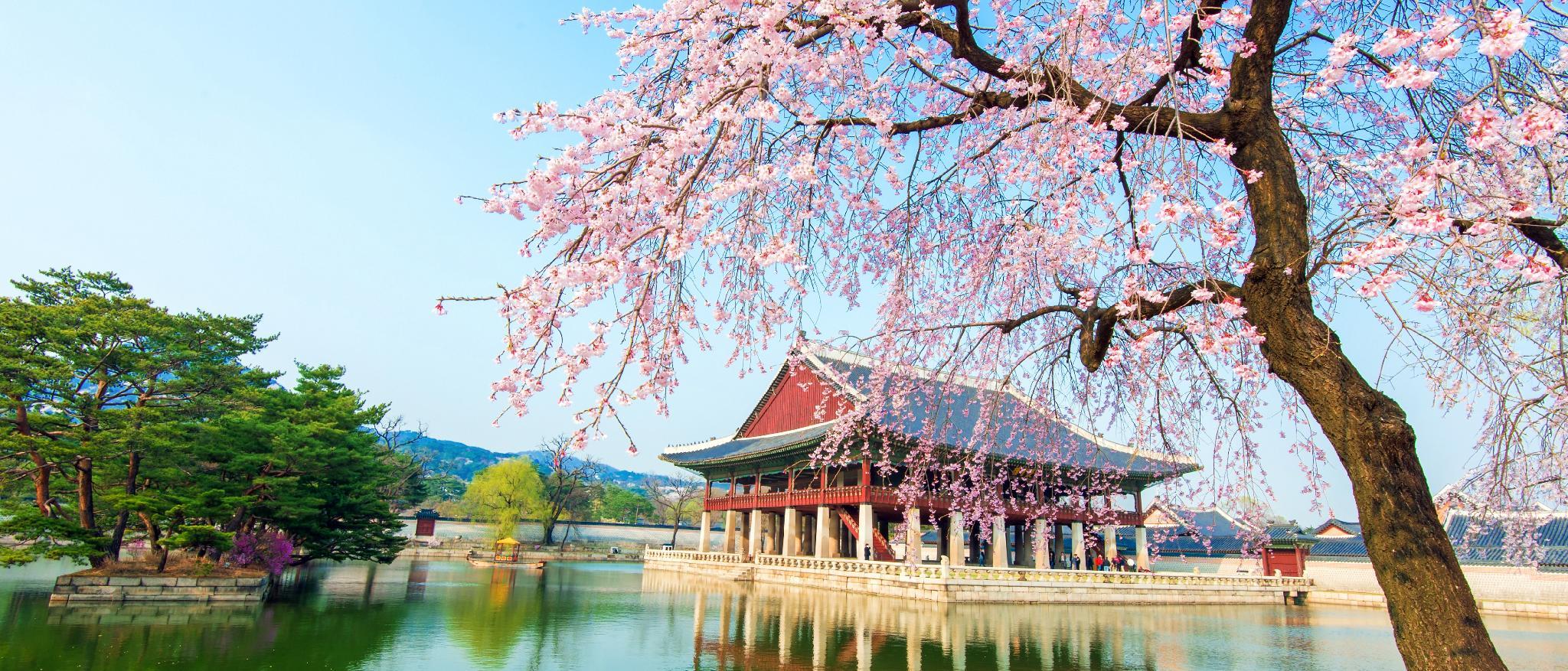 Seoul Hotels, South Korea: Great savings and real  - Agoda