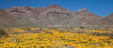 El Paso (Texas)