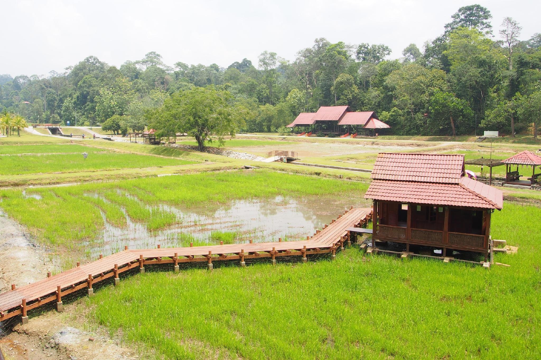 Rayyan Homestay, Klang