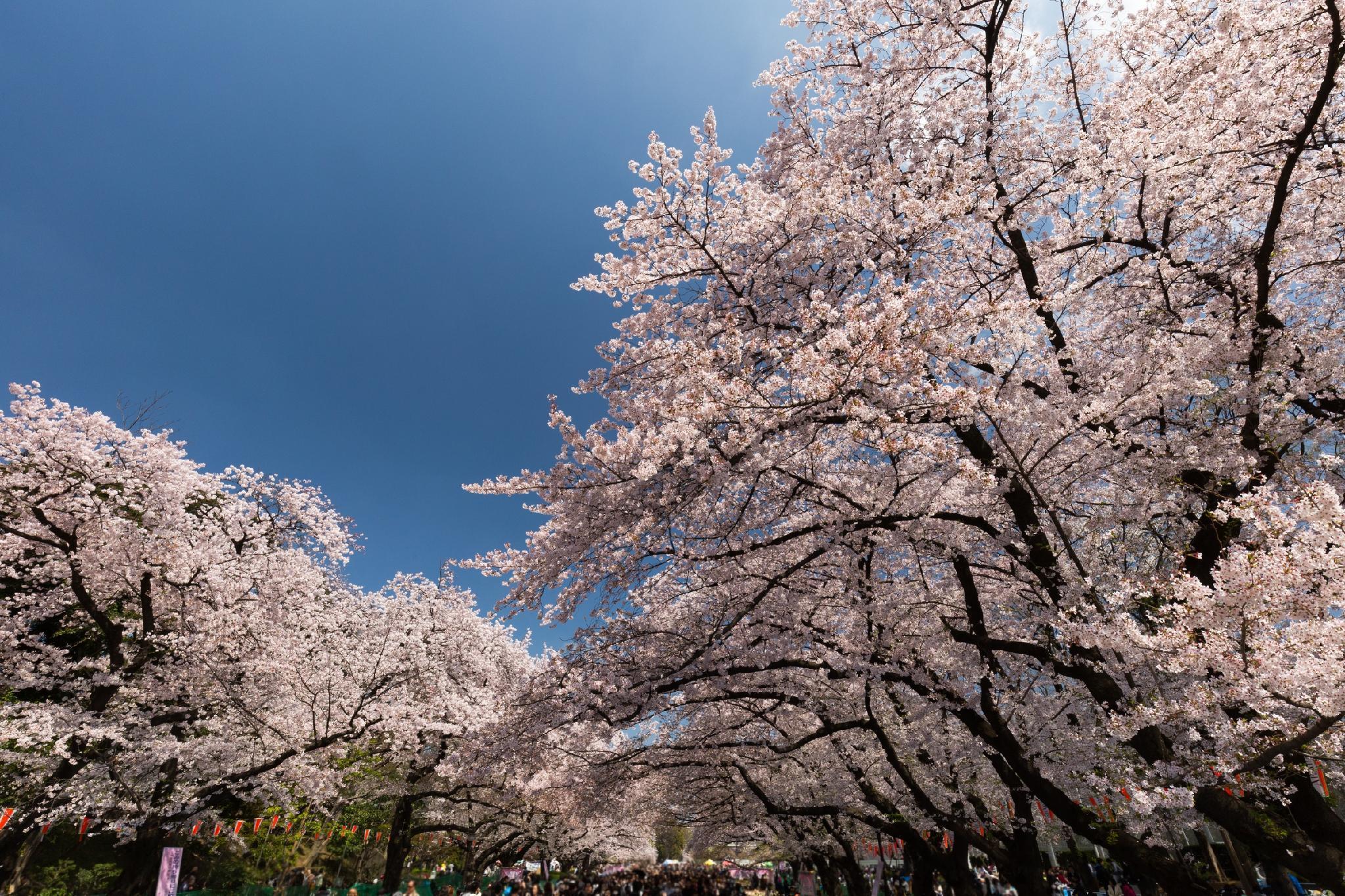 3 minutes walk from Kita Ikebu - Maison Fumizumi 201