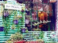 Baan Phrasing Chiangmai 1