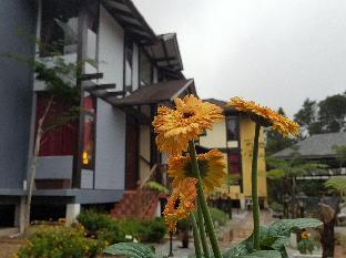 Casa Loma Cameron Highland, Cameron Highlands