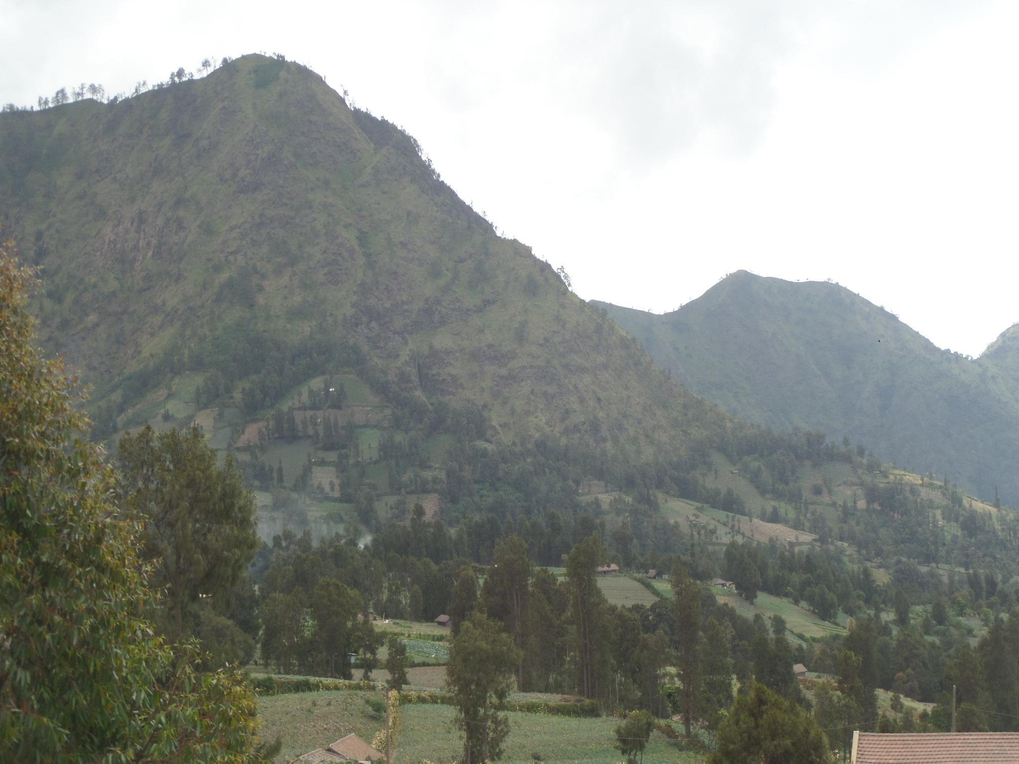 Losmen Setia Kawan I, Probolinggo