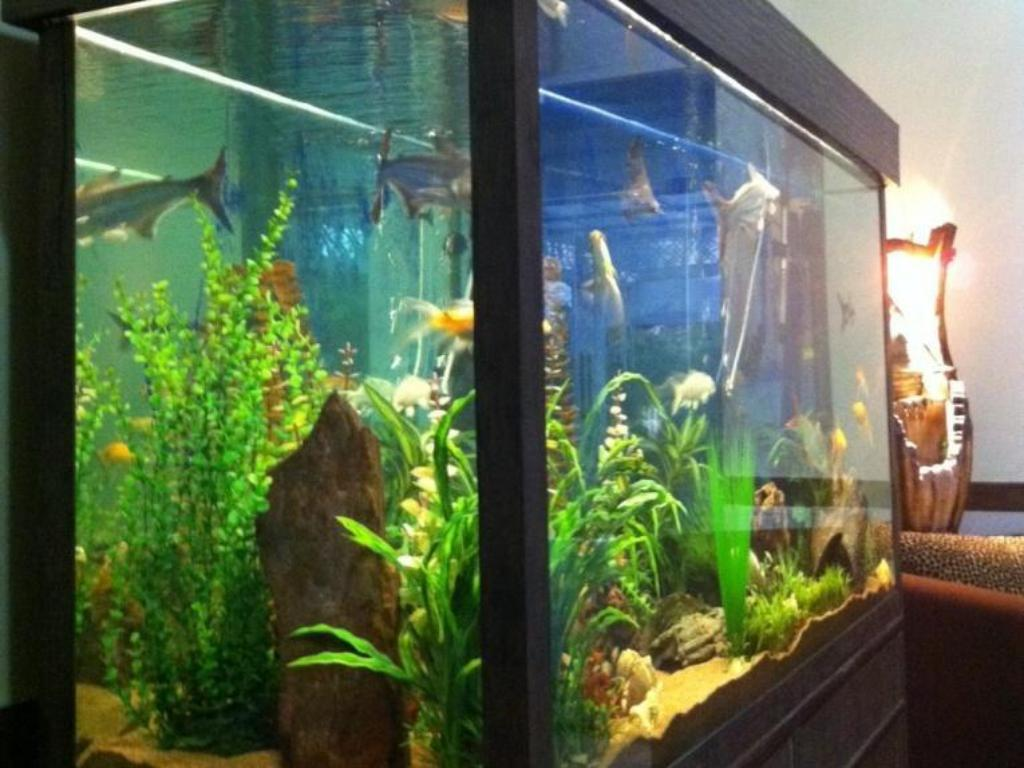 Fish Aquarium Rates In Delhi - Best price on angel residency greater noida new delhi n c r in new delhi and ncr reviews