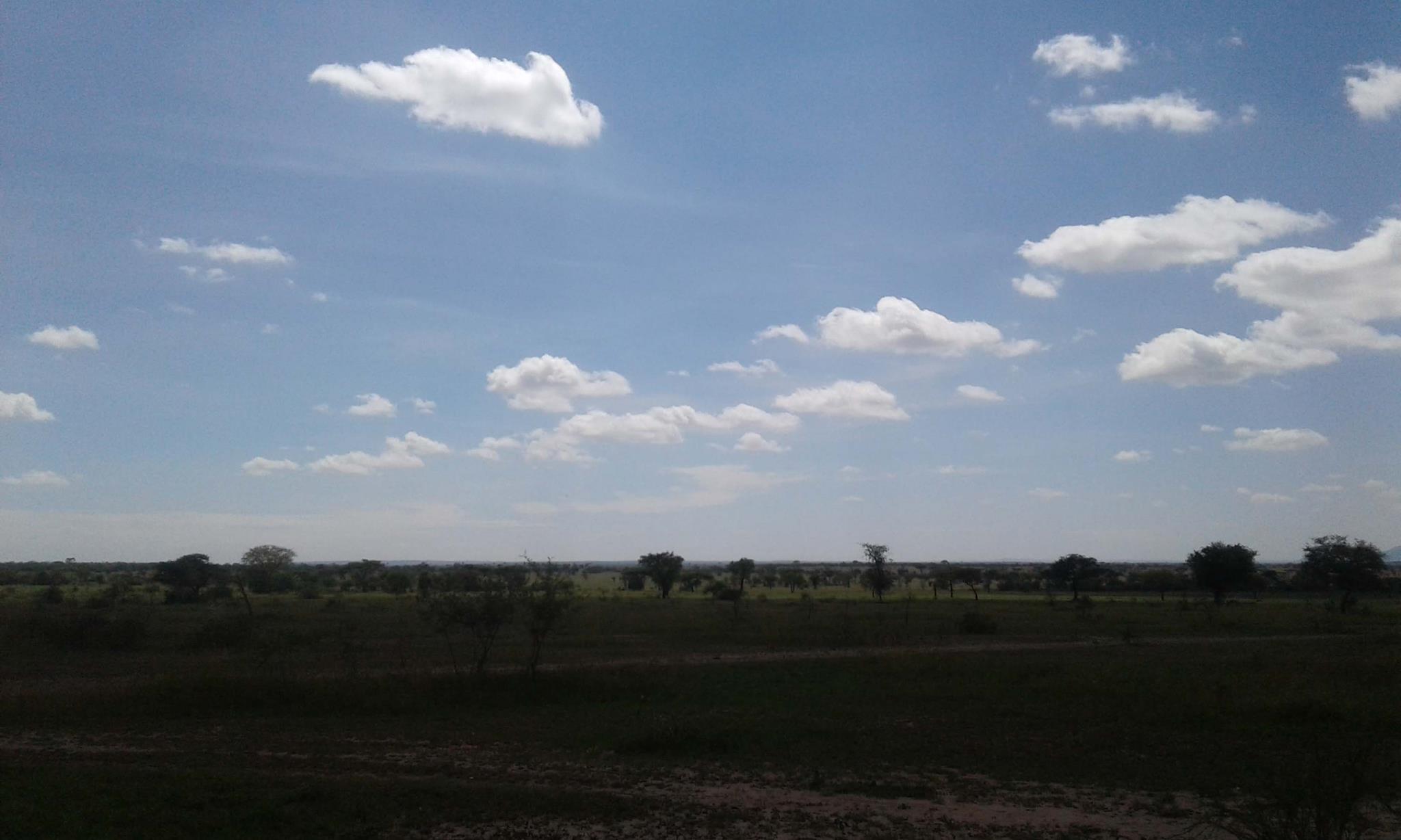 Zebra kemangore Bush Tented Lodge, Serengeti