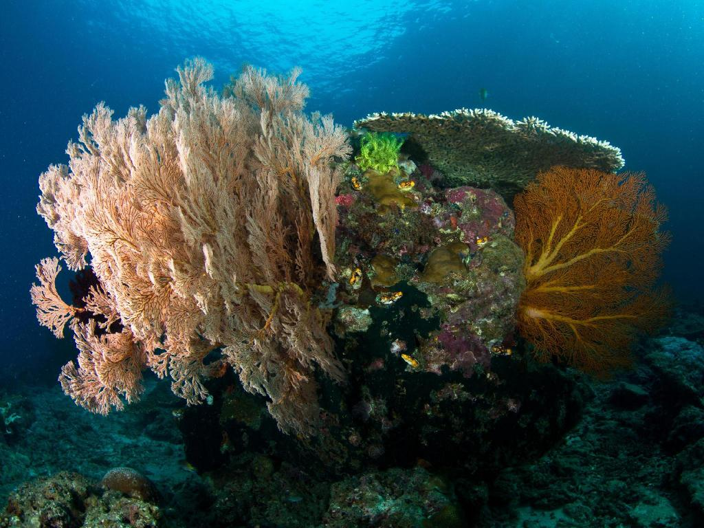 Best Price on Plankton Divers - Zions Welcome Inn in Palawan + Reviews