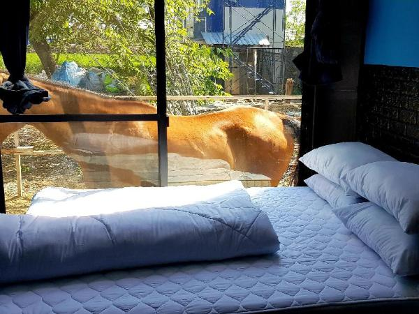 RODEO HOUSE BKK Exclusive Queen BED DMK Airport Bangkok