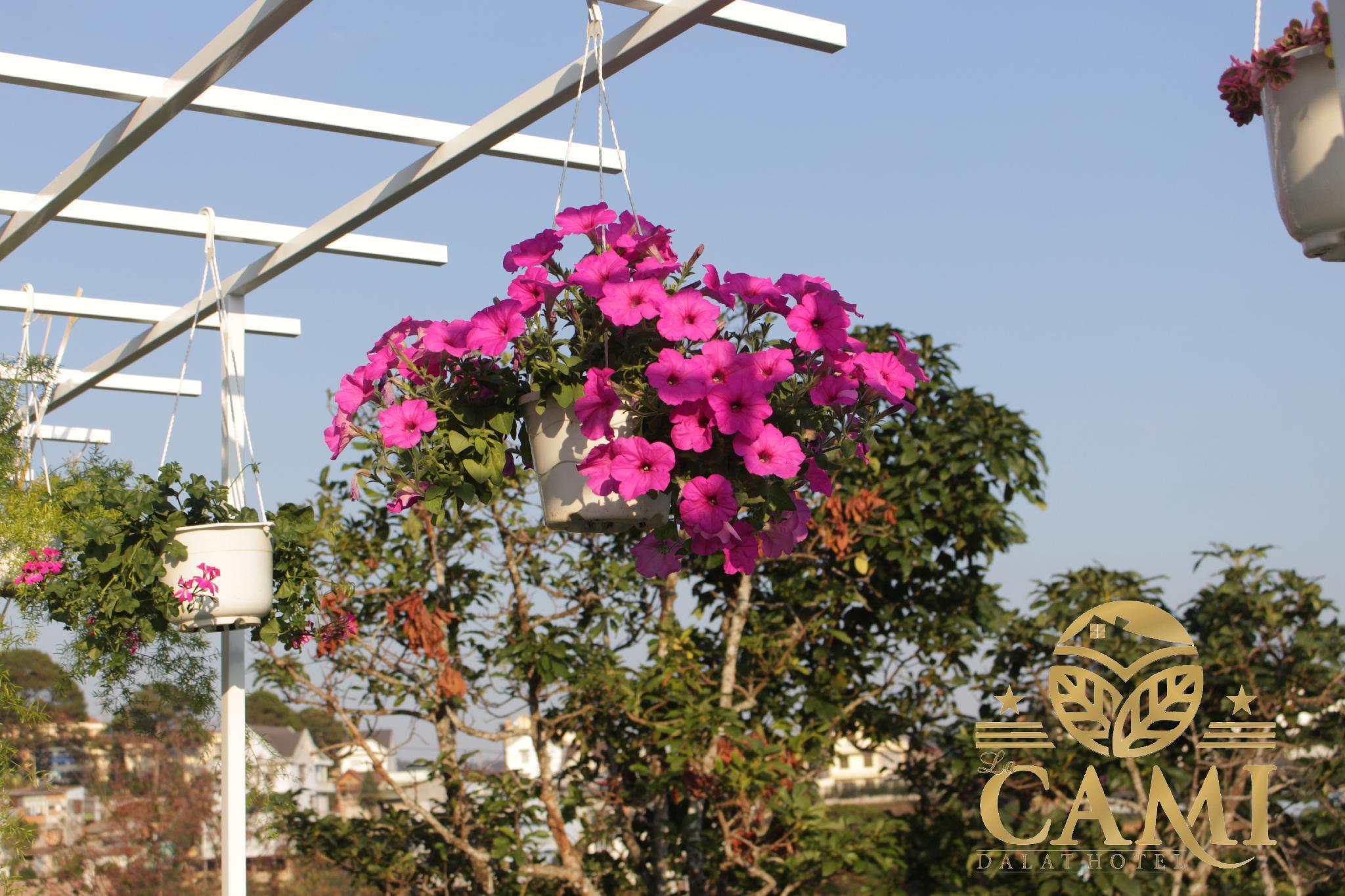 Lacami Dalat Hotel, Đà Lạt