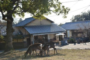 Best Hotels in Nara, Japan: Cheap & Luxury Accommodations
