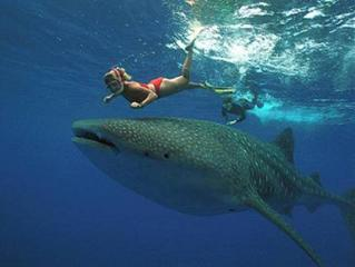 MDF Beach Resort and Day Tours near Whalesharks