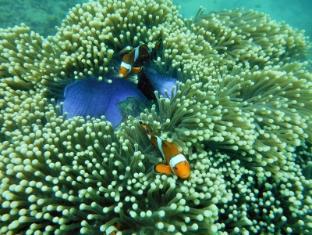 Phi Phi Relax Beach Resort Koh Phi Phi - Sports and Activities