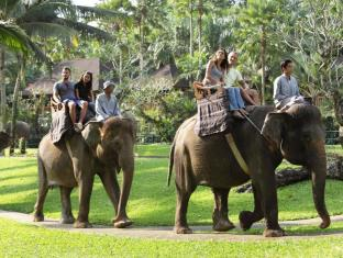 Elephant Safari Park Lodge Hotel Bali - Elephant Ride