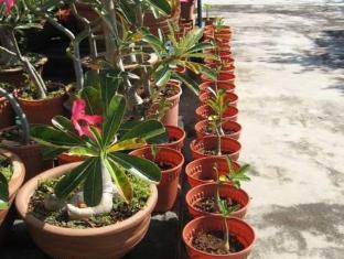 Hotel Mingood Penang - Desert Roses Rows