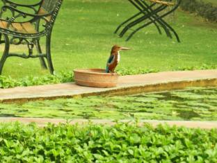 Hotel Jai Niwas Jaipur - Kingfisher pays a visit at Lotus Pond