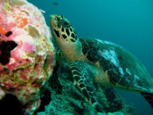 Eriyadu Island Resort Maldives Islands - Sports and Activities