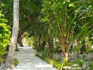 Eriyadu Island Resort Maldives Islands - Garden