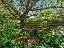 Bungunyah Apartments: garden