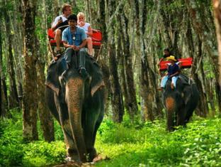 Lanta Pavilion Resort Koh Lanta - Elephant Trekking / Bathing with the Elephant Packages