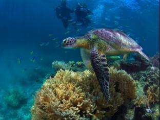 Fitzroy Island Resort Cairns - Green Sea Turtle
