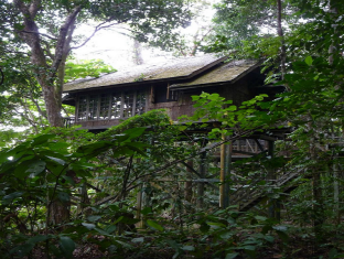 Permai Rainforest Resort Kuching - Treehouse