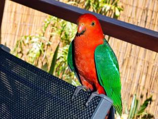 Witches Falls Cottages Gold Coast - Visiting King Parot