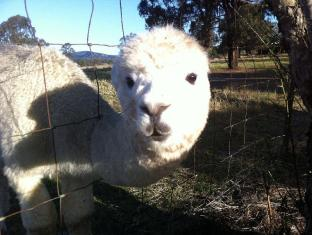 /starline-alpacas-farmstay-resort/hotel/hunter-valley-au.html?asq=jGXBHFvRg5Z51Emf%2fbXG4w%3d%3d