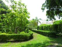 River View Resort: garden