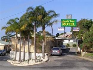 /koala-tree-motel/hotel/port-macquarie-au.html?asq=jGXBHFvRg5Z51Emf%2fbXG4w%3d%3d