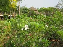 Aye Yar River View Resort: garden