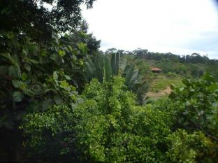 Sepilok Forest Edge Resort Sandakan - Widok