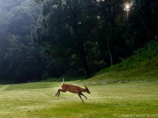 Gokarna Forest Resort Katmandu - Pole golfowe