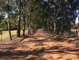 Blackwattle Farm B&B Sunshine Coast - tree lined driveway