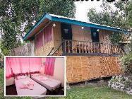 Taclobo стая