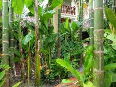 Siem Reap Tree of Life Villa   Cambodia Hotels