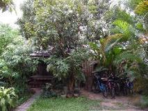 Lao Lu Lodge: garden