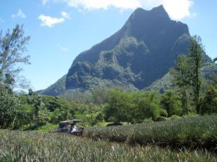 Hotel Hibiscus Moorea Island - Safari tours