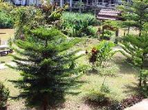 Backpacker Riverside Guesthouse: garden