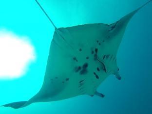 Stingray Beach Inn Maldives Islands - Mantha-ray