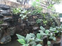 Philippines Hotel | garden