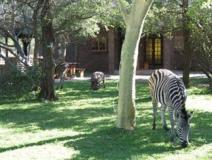 South Africa Hotel Accommodation Cheap | animals