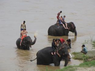 Hotel River Side Chitwan - Elephant bathing
