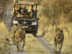 Morokolo Game Lodge   South Africa Budget Hotels